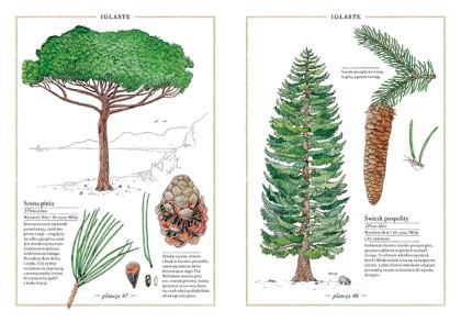 inwentarz-drzew2
